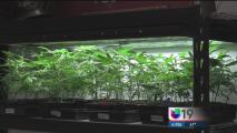 Con las nuevas leyes, la marihuana medicinal es deducible de impuestos en California