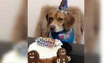 Celebración del Día Nacional del Perro: Seguidores de Univision Chicago envían fotos de sus mascotas