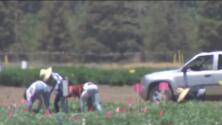 Calor extremo y humo de incendios: impactan la salud de los trabajadores del campo