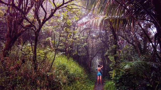 Descubre los mejores parques nacionales de Puerto Rico