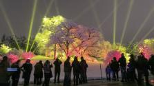 Un espectáculo único iluminará el Morton Arboretum de Illinois
