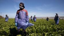 Congresistas piden a Biden que apoye la legalización de beneficiarios del TPS y de trabajadores esenciales y del campo
