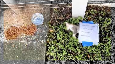 Hallan a gatito muerto en Miami Beach: la comunidad cree que fue envenenado por un vecino