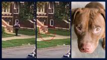 Policía mata a un perro cuando atendía una disputa entre vecinos en Cícero