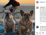 """La cantante Lady Gaga recupera a sus dos perros """"sanos y salvos"""""""