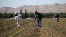 Ocho de cada 10 indocumentados en EEUU son trabajadores esenciales durante la pandemia, según estudio