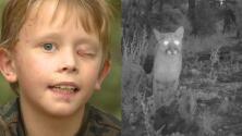 Niño de 8 años logró salvar su vida al defenderse del ataque de un león de montaña