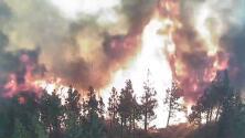 Cámara capta cómo las llamas del incendio Dixie arrasan un bosque entero en California