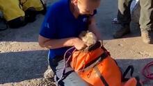 Rescatan a perrita que quedó atrapada cinco días en una grieta de un parque en Nueva York