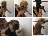Rescatan a 11 perros dentro de contenedores de basura: la policía busca al responsable
