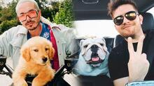 📸 Día del Perro: cuando los famosos, sus carros y sus mascotas crean el combo perfecto