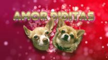 ¡Amores perros! Mira la romántica historia de Honey y Bruno