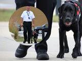 Conozca a Leo: el perro de terapia de la Policía de Orland Park