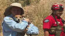 Rescatan a un perro que cayó de un sendero en el Bosque Nacional Ángeles