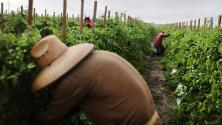 Gobierno Biden anuncia que perdonará deudas a los agricultores que pertenecen a minorías