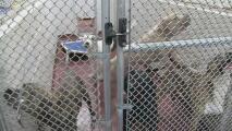 Rescatan 85 mascotas en una vivienda de Fulton