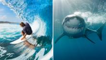Surfista sufre mordida de tiburón en playa del norte de California