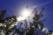 Tiempo para Salt Lake City: anticipa altas temperaturas y cielos parcialmente nublados