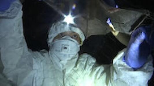 El oscuro viaje al fondo de una cueva para encontrar la fuente del covid-19