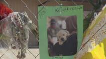 Tras la muerte de 75 perros en un incendio en Georgetown piden se refuercen las leyes en centros de cuidado de mascotas