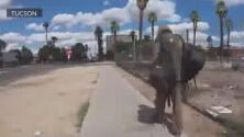 """Participa en la """"Caminata contra el hambre"""" en Tucson"""