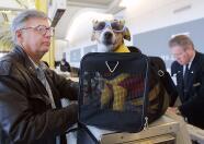 Tips para viajar con tu mascota en avión