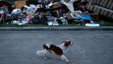 Así actúan Humane Society de EEUU y voluntarios en beneficio de los animales tras Harvey