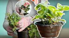 9 trucos para salvar tus plantas