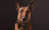 FBI de Newark retira con honores a su valiente agente K9 Roxy