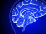 Coronavirus likely to affect brain, UTSA study finds