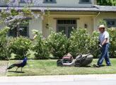 El gobernador de California firma una ley que prohíbe la venta de cortadores de césped, motosierras y sopladores que utilizan gasolina