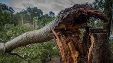 Dos tornados tocaron tierra en Nueva Jersey durante la tormenta tropical Elsa, confirman autoridades
