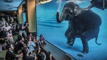 Animales en riesgo protegidos por las cámaras: las mejores fotografías de vida salvaje