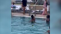 Iguana sorprende a los bañistas en una piscina de Miami