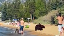 Familia de osos sorprende a los bañistas en una playa de Lake Tahoe