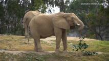 Disfruta de un safari en familia en el San Diego Zoo