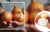 Autoridades de EEUU vinculan brote de salmonella a cebolla mexicana