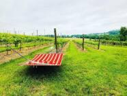 300 viñedos y hermosos paisajes para disfrutar de la primavera en Pensilvania