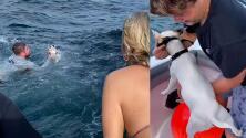 (VIDEO) Rescatan a un perro que se encontraba nadando en medio del mar