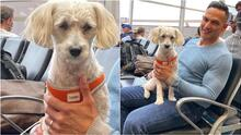 ¡Hoy celebramos a los perros en su día!: estas son las consentidas mascotas de Univision Miami