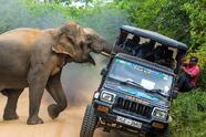 This is My Jungle! by Sergey Savvi A wild elephant attacks a jeep full of people. We should respect nature and care more about it, but we should also avoid taking unnecessary and reckless risks.