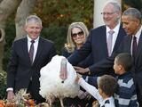 Tater y Tot, los últimos pavos que perdonará Obama... como presidente