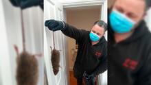 Ratas gigantes generan hasta gritos de miedo entre residentes en NY