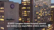 Se realizó el trasplante de un riñón de cerdo en un paciente humano en un hospital de NYC
