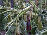 Más de 3,000 hectáreas de cultivos sufrieron daños por el huracán Patricia