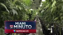 'Miami en un Minuto': legisladores estatales aprobaron más de una docena de operadores de venta de marihuana medicinal en Florida