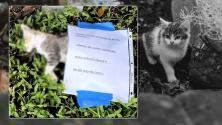 Hallan muerto a un gatito en Miami Beach con un mensaje de advertencia