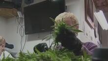 Carolina del Norte: ¿cómo va el proceso de legalización de la marihuana con fines medicinales?