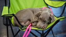 ¿Quién se queda con la mascota en un proceso de divorcio? Ley en Nueva York busca ayudar ante este dilema