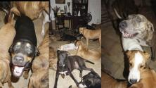 Mujer da refugio a 97 perros en su casa durante el huracán Dorian